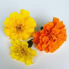 フレンチマリーゴールド キク科 5月~11月 利用部位:花びらのみ