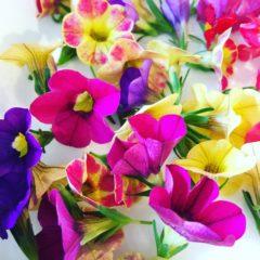 カリブラコア ナス科 6月~10月 花の部分